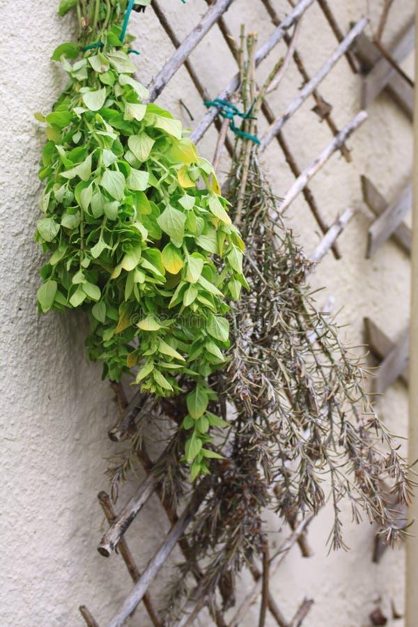 suszarniczy ziele obraz stock