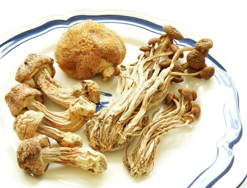 suszone chińskie egzotycznych grzyby środków spożywczych fotografia stock
