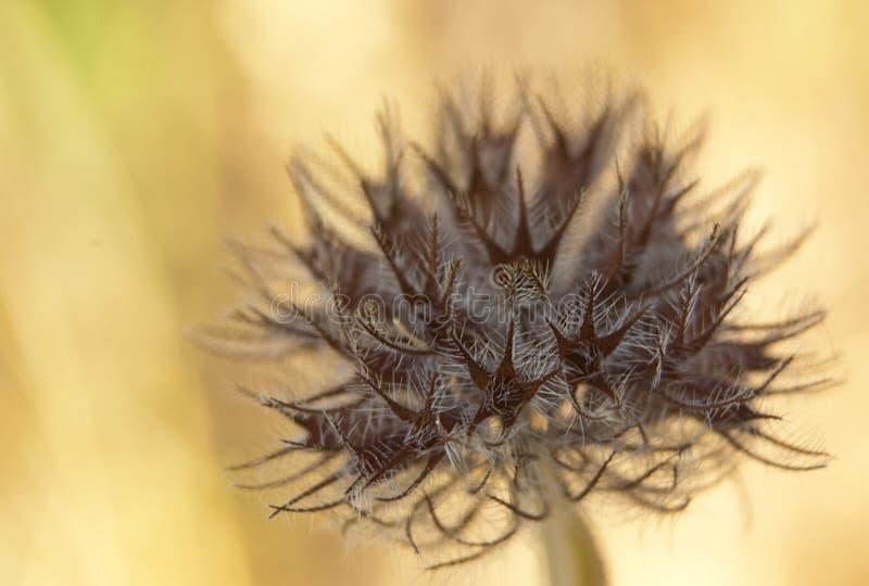 suszone kwiat obraz stock