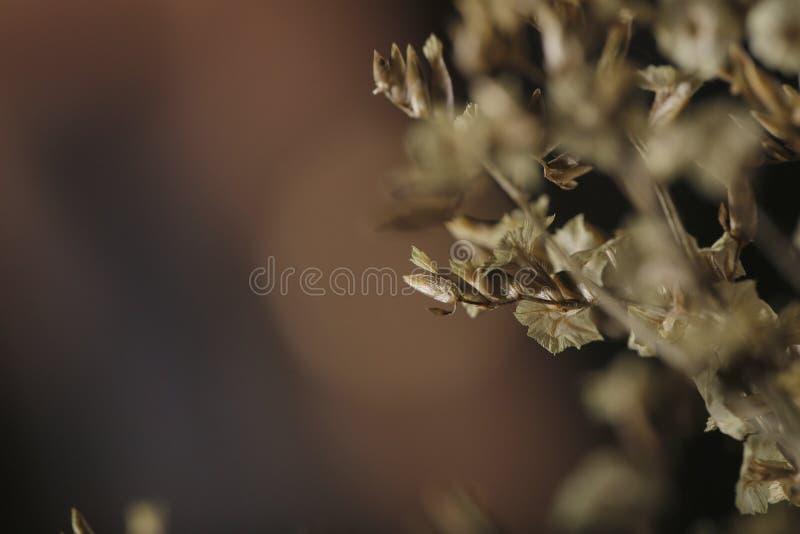 suszone kwiatki obraz stock