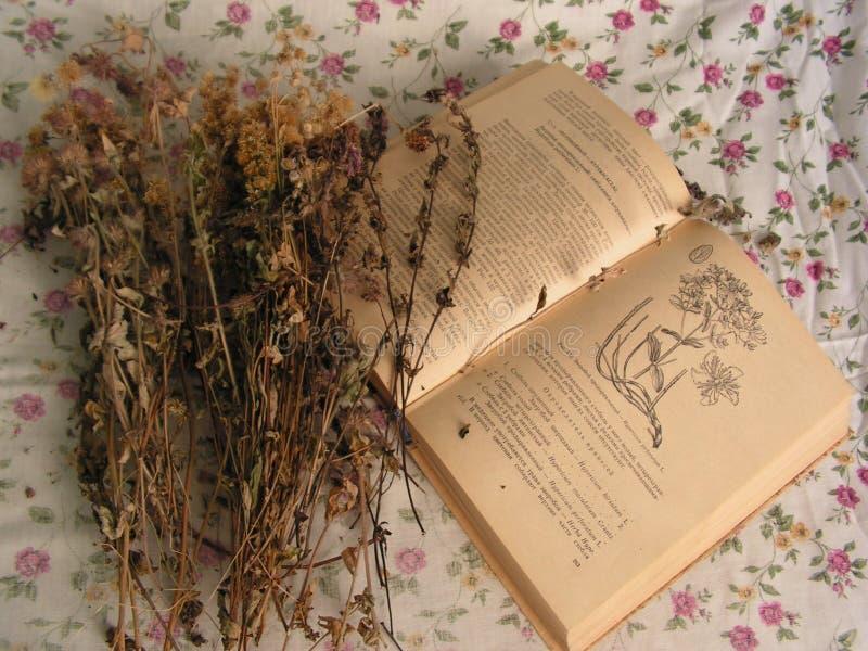 suszone kwiatki ro?liny lecznicze obraz royalty free