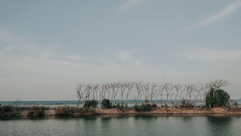 Suszone liście bez drzew wyściełały plażę obrazy royalty free