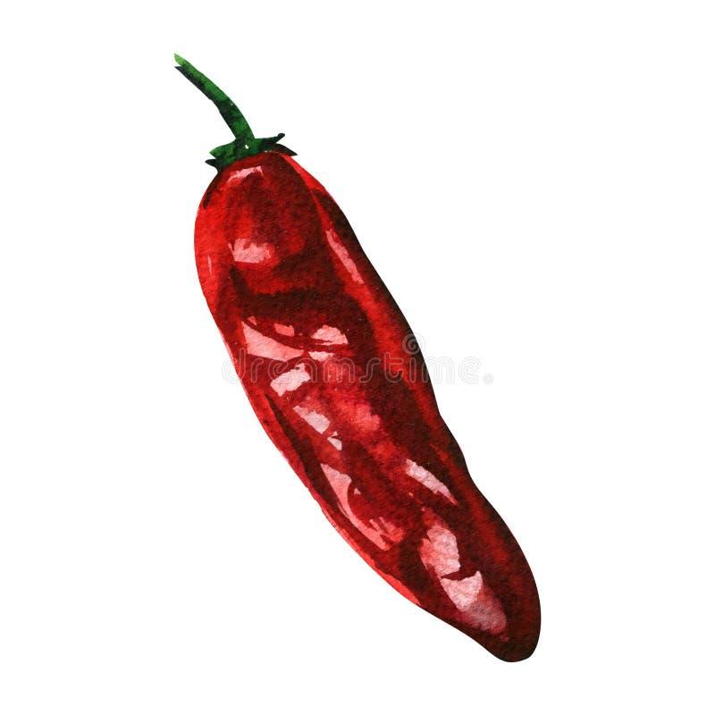Suszony pieprz czerwony, pieprz chili cayenne, warzywa pikantne, izolowane, ręcznie ciągnione akwarele na białym tle zdjęcie stock