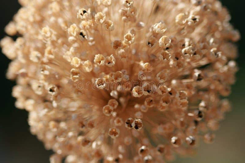 suszyć kwiaty obrazy royalty free
