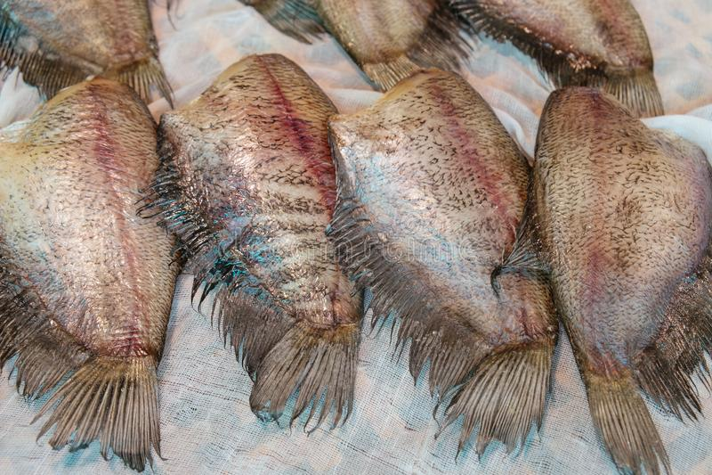 Suszyć słone surowe Snakeskin gourami ryby zdjęcia royalty free