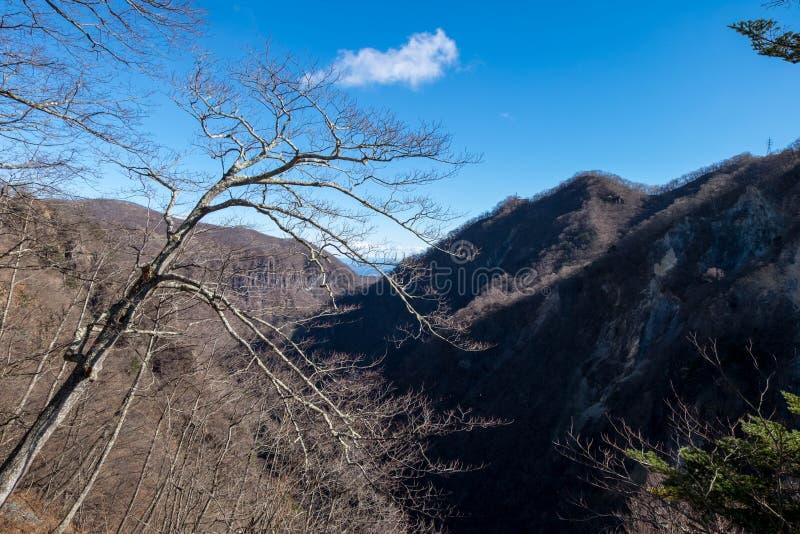 Suszy gałąź drzewa i las bez liścia w zimie przy Kegon fotografia stock