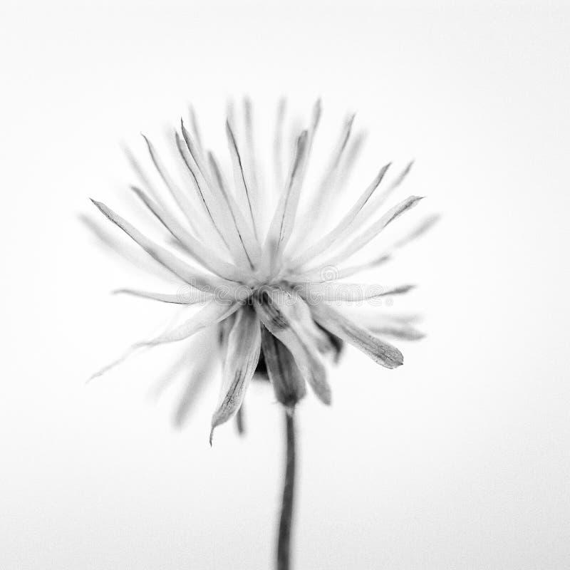 Suszy kwiatu obraz stock