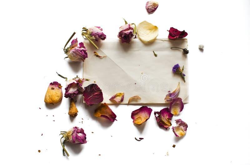 Suszy kwiaty i pustego prześcieradło papier zdjęcie stock