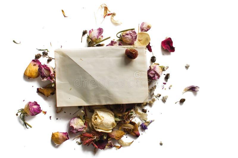 Suszy kwiaty i pustego prześcieradło papier fotografia stock