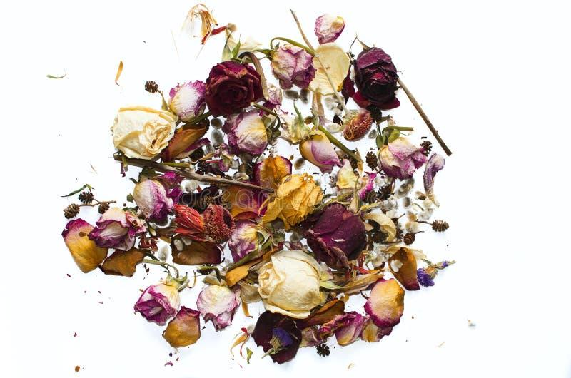Suszy kwiaty i różanych płatki na białym tle fotografia stock
