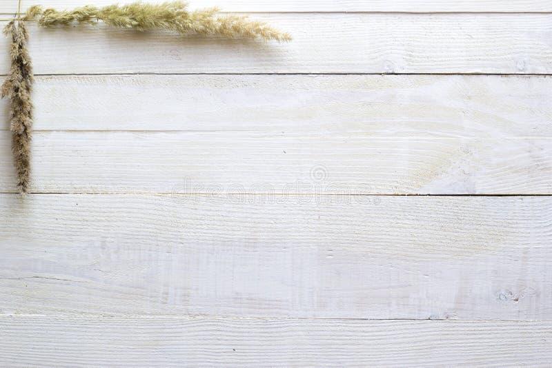 Suszy kwiaty na białym drewnianym tle, tapeta obrazy stock