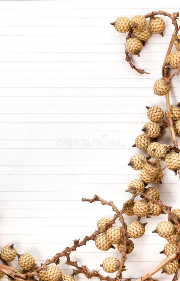 Suszy kwiaty na papierze zdjęcia royalty free