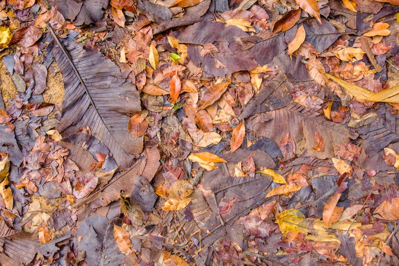 Suszy liście z wilgocią od mgły na ziemi zdjęcia stock