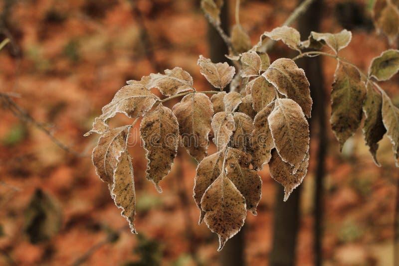 Download Suszy li?cie obraz stock. Obraz złożonej z jesienny, zakończenie - 41953631