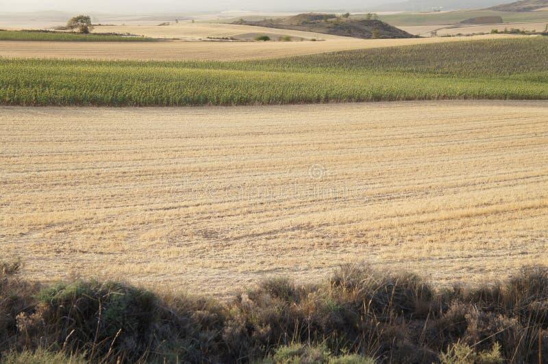 Suszy pole w Hiszpańskiej wiosce, sucha trawa, kolor żółty obraz stock