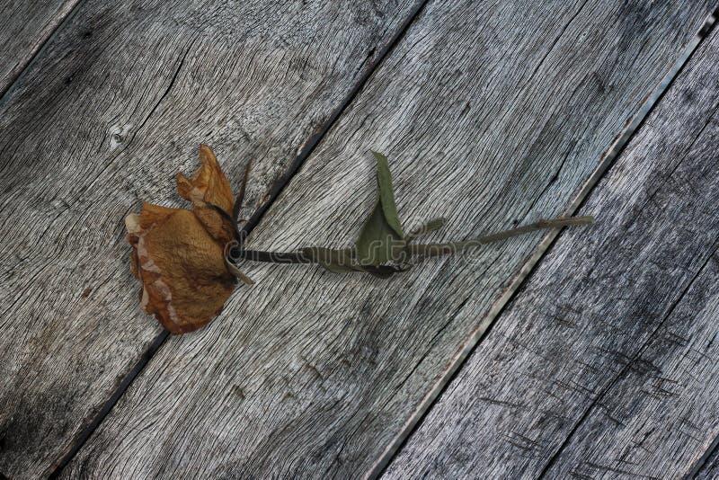 Suszy różane ścinek ścieżki obrazy stock