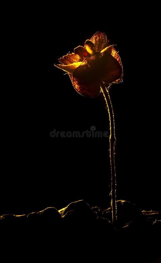suszy rośliny zdjęcie royalty free