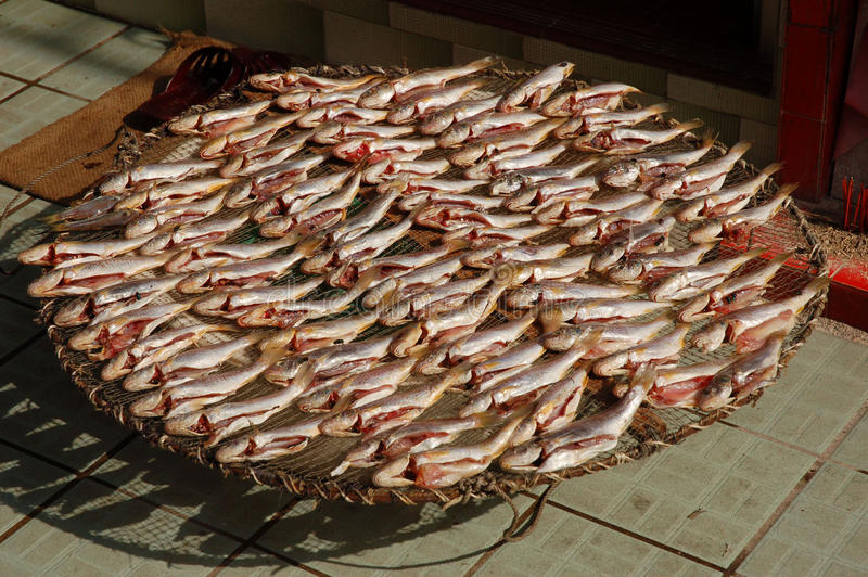 suszy ryba obrazy stock
