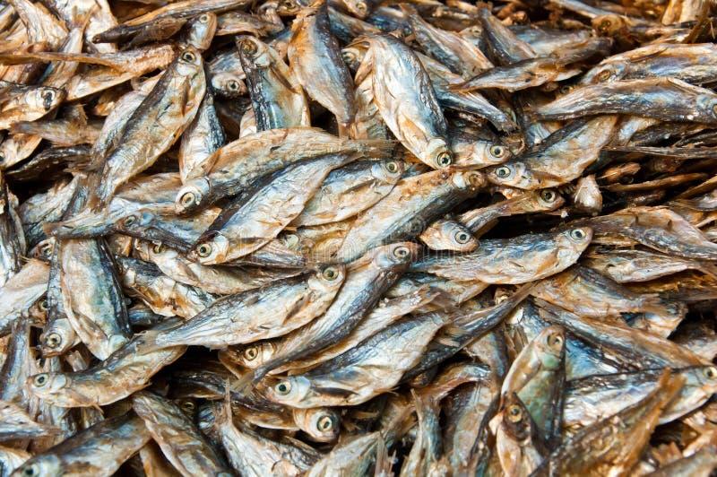suszy ryba obraz royalty free