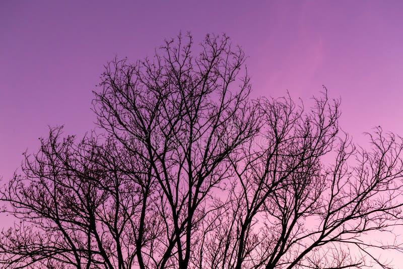 suszy sylwetki drzewa zdjęcia royalty free