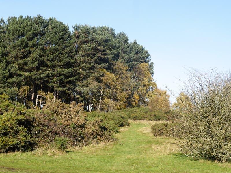 Sutton Park west Midlands. Sutton Park, Sutton Coldfield, West Midlands stock photography