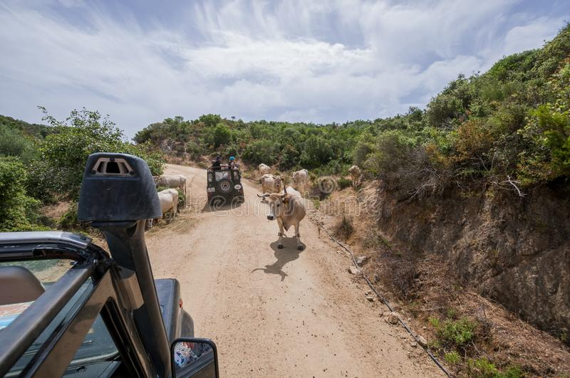 SUV car Land Rover Defender 110 driving on the off-road stock image