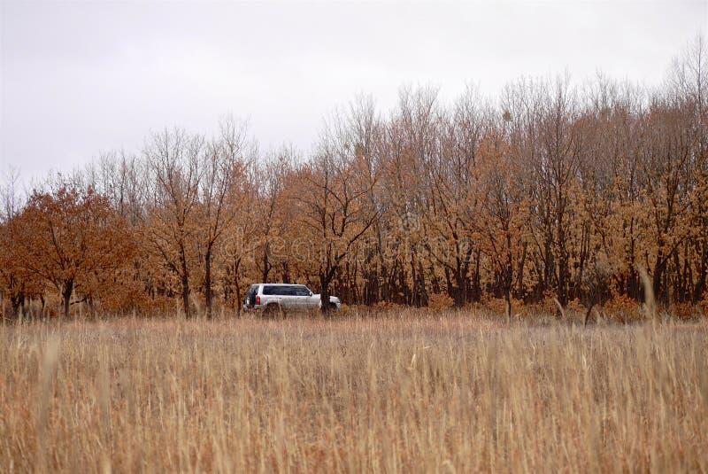 Suv está na floresta do outono no tempo nebuloso imagens de stock