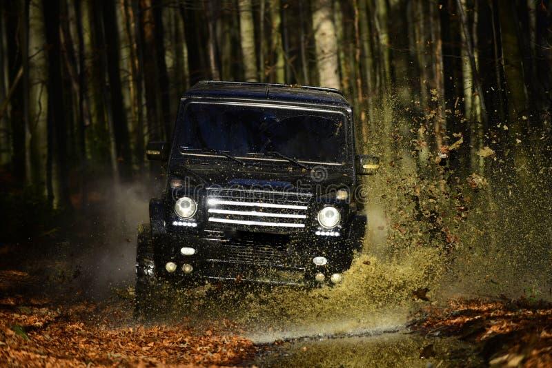 SUV lub offroad samochód na ścieżce zakrywającej z liśćmi krzyżuje kałużę z wodnego pluśnięcia Samochodowy ścigać się w jesień le zdjęcia royalty free