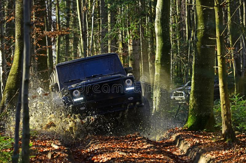 SUV or offroad car on path covered with leaves crossing puddle with water splash. Offroad race on fall nature background. Extreme, challenge and 4x4 vehicle royalty free stock photo