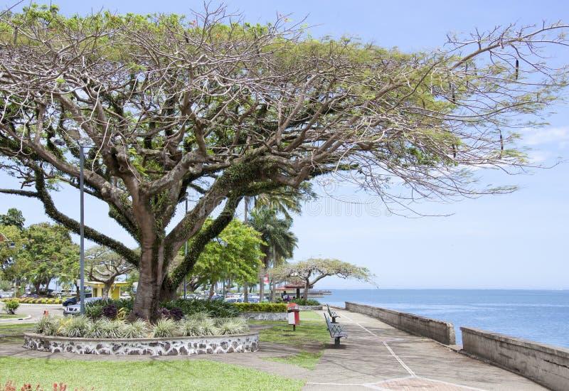Suva miasteczka parki obraz royalty free