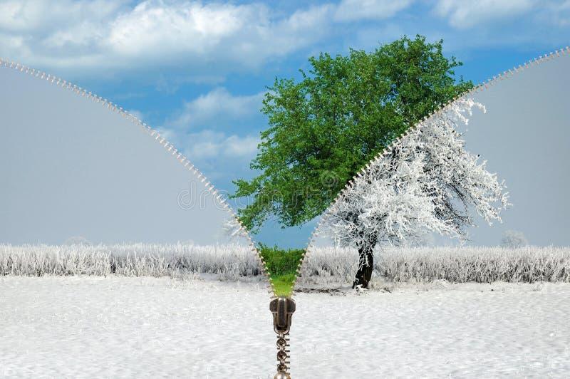 Suwaczka odmieniania sezony
