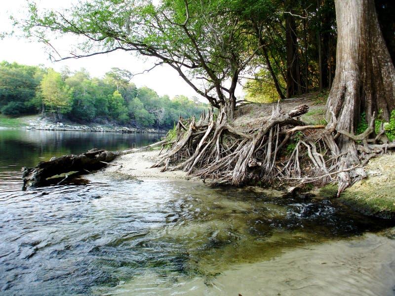 suwannee парка florida стоковое фото rf