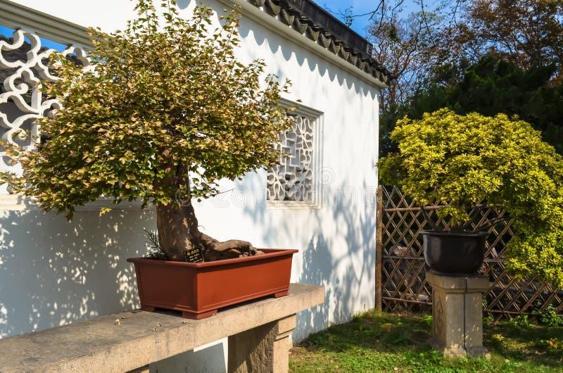 SUZHOU, CHINA - 23 de outubro de 2013: Árvore dos bonsais no jardim humilde do ` s do administrador fotografia de stock