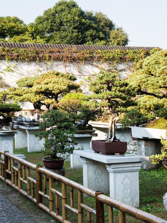 Bonsai installation at Lingering Garden, one of the most famous classical gardens of Suzhou royalty free stock photography