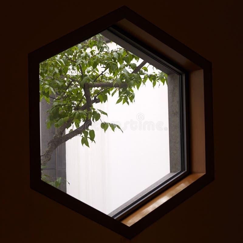 Suzhou museumfönster och träd arkivbilder
