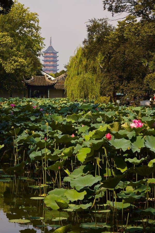 Suzhou trädgård arkivbilder