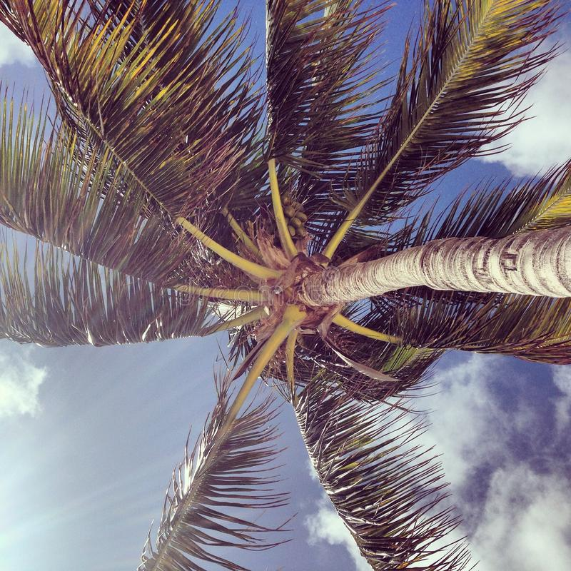 Svänga för palmträd royaltyfria foton