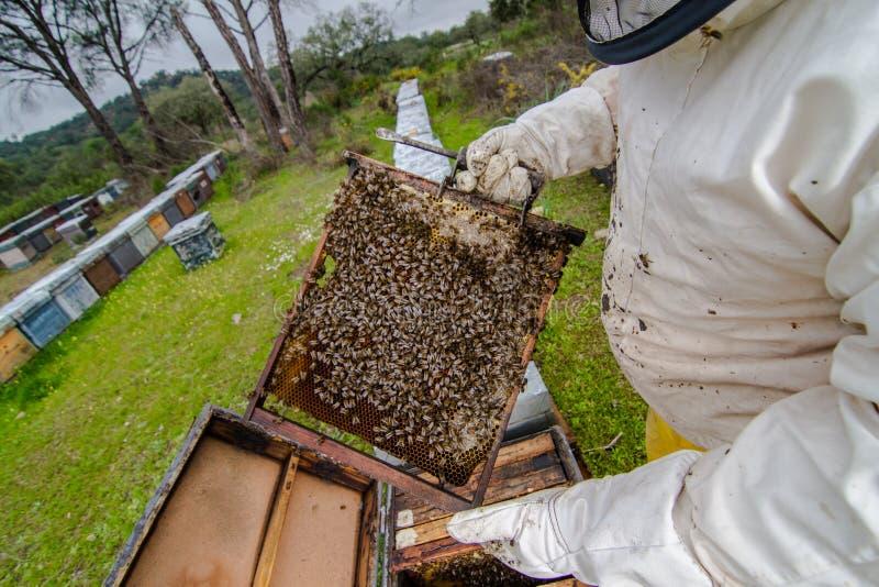 Svärmen samlade åtskilliga bin för honung arkivbild