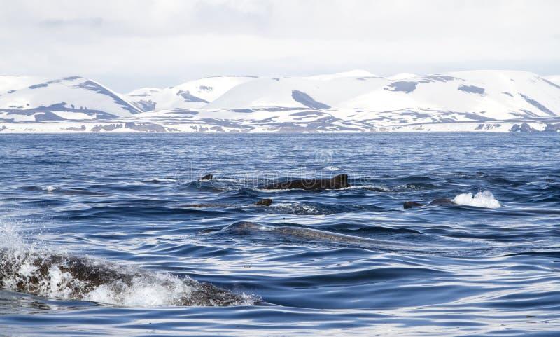 Sväva för floaters för grupp norr arkivfoto