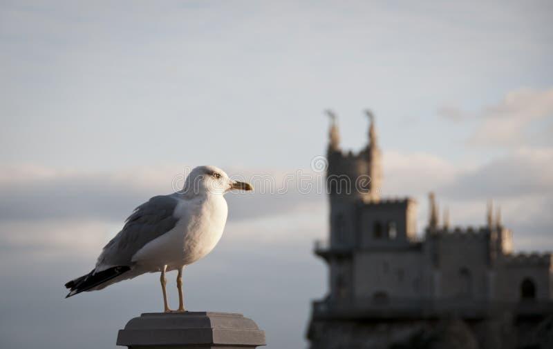 svala ukraine för seagull för crimea rede s fotografering för bildbyråer