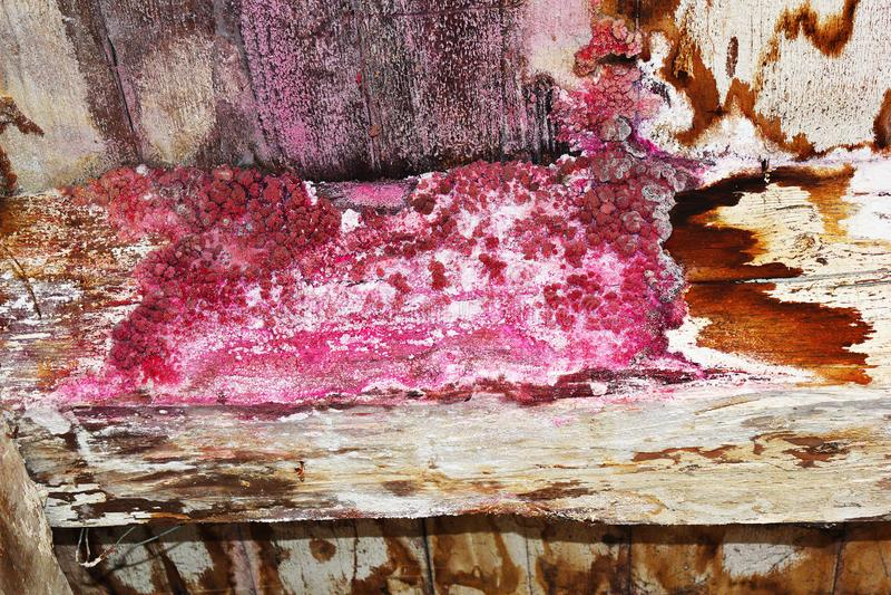 Svamp- attack på gammal trästråle arkivfoto