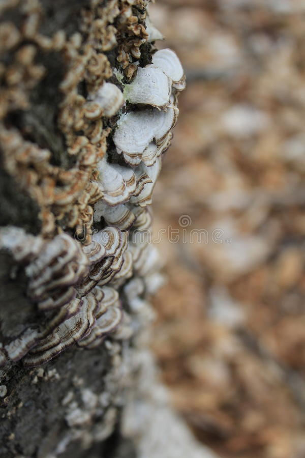 Svamp på en tree royaltyfria foton