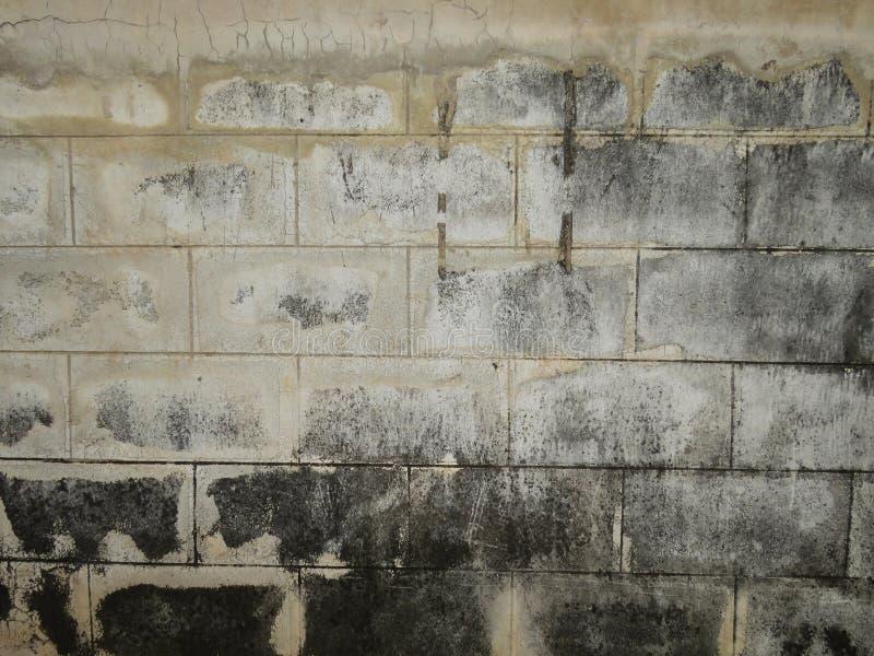 Svamp på väggen arkivbilder