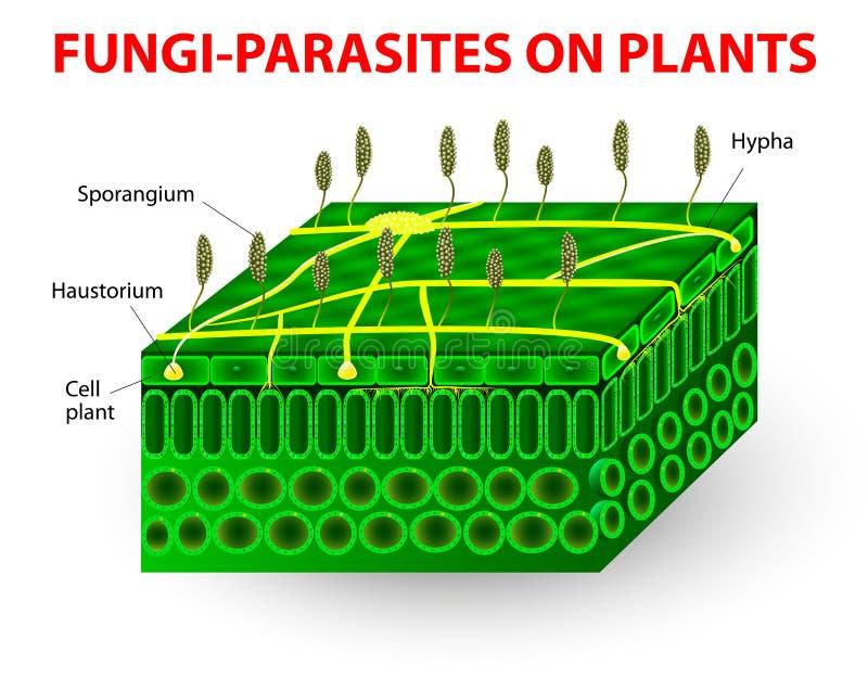 Svamp-parasit på växter stock illustrationer