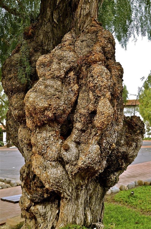 Svamp tillväxt på träd arkivfoto