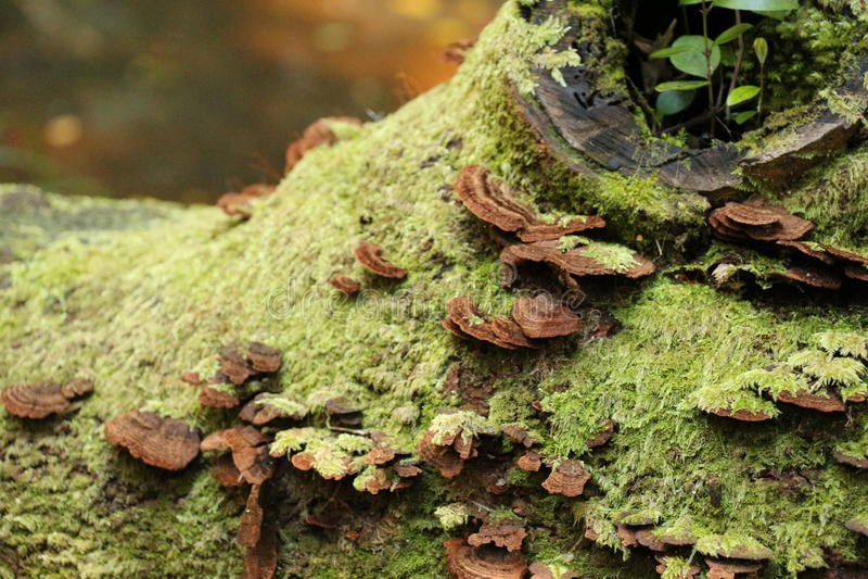 svamp växande tree arkivbild