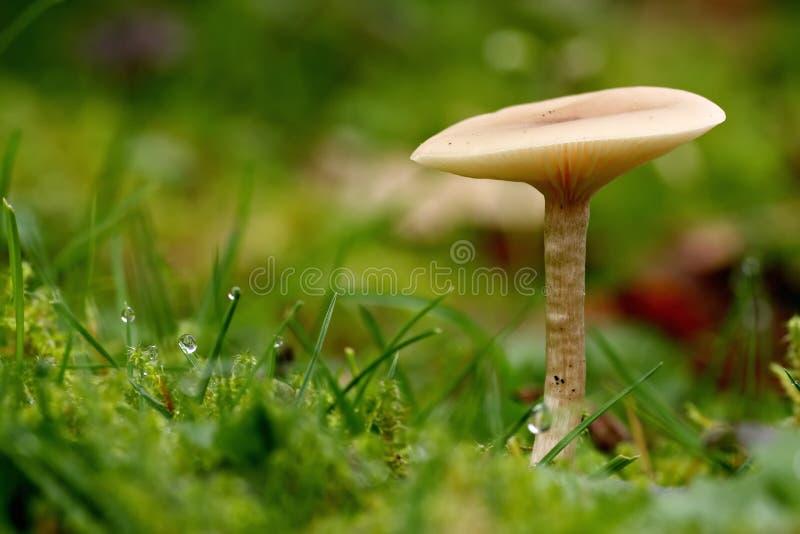 svampar royaltyfria bilder