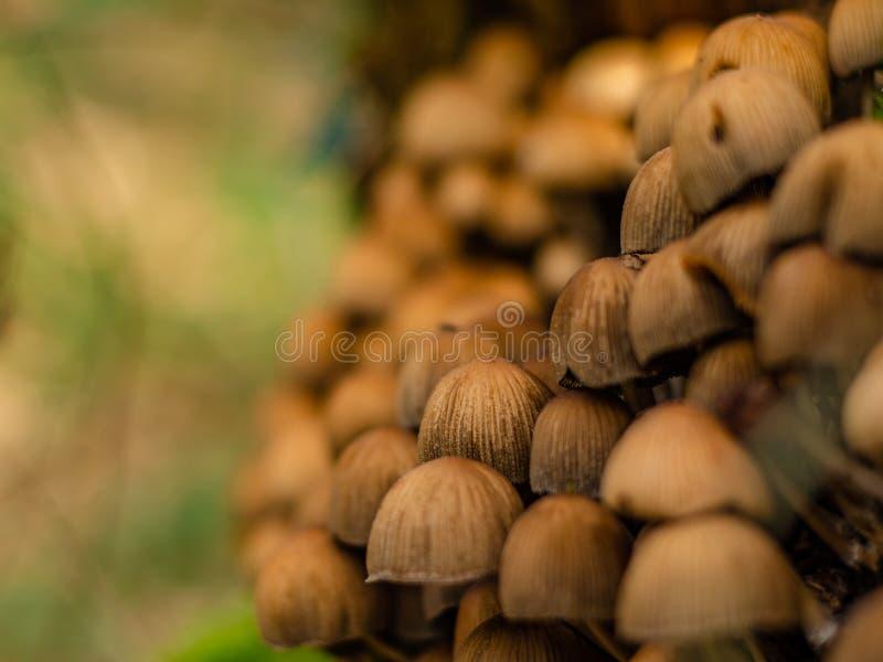 Svamprummens skönhet i skogen royaltyfri bild