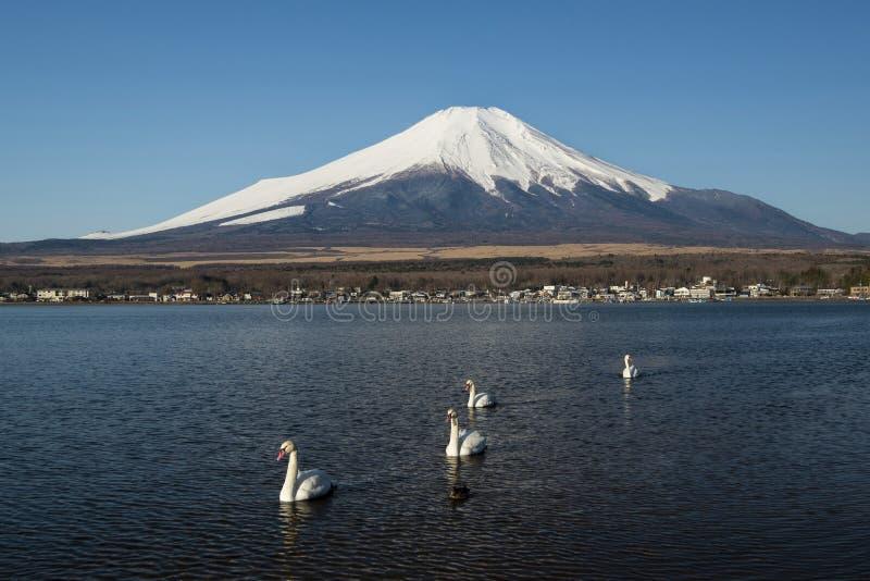 Svanar och Mount Fuji i sj?n Yamanaka, Japan royaltyfri fotografi