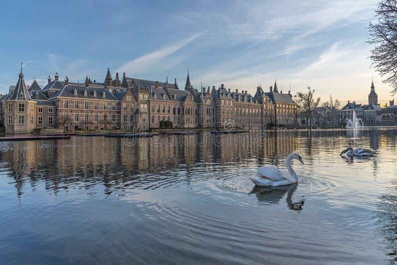 Svanar på den holländska parlamentet royaltyfri bild